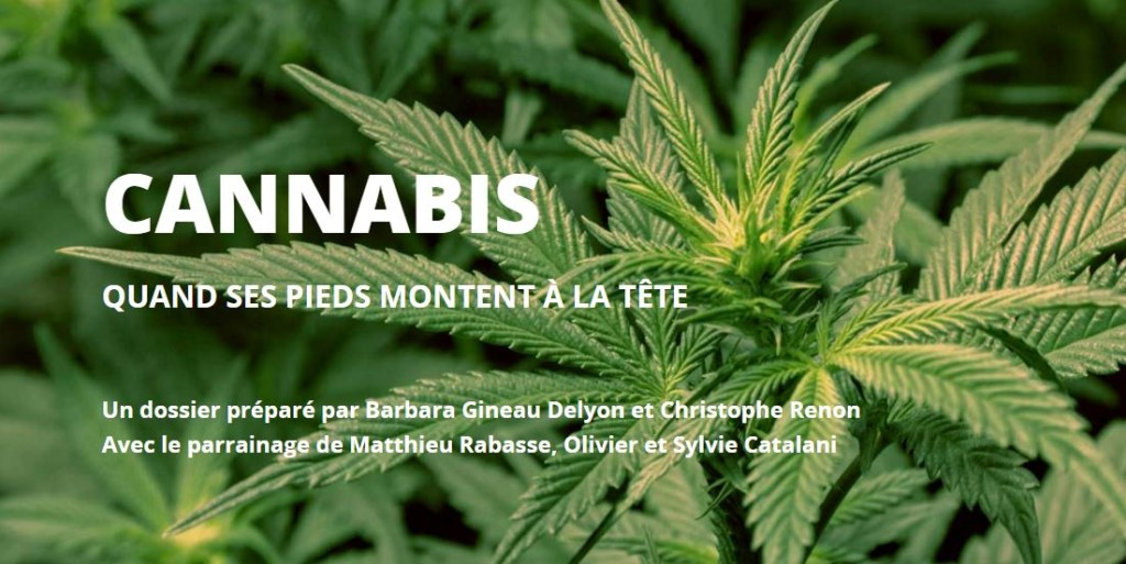 Addiction Cannabis - L'esprit Sorcier : dossier cannabis