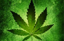 Addiction Cannabis - Fil Santé Jeunes : Connaître le cannabis