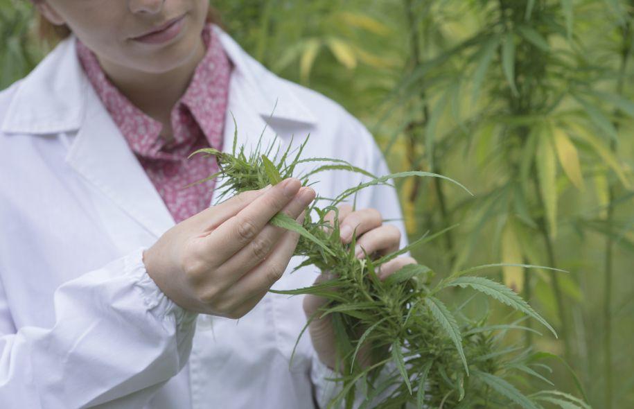 Addiction Cannabis - Au CHUM, un dérivé du cannabis sera mis à l'essai pour contrer la dépendance à la cocaïne