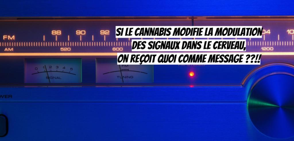 Addiction Cannabis - CANNABIS / Quand la recherche sur le cannabis fait progresser les neurosciences