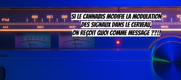 CANNABIS / Quand la recherche sur le cannabis fait progresser les neurosciences