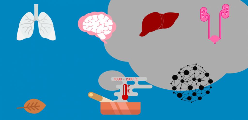 Addiction Tabac - TABAC / Que devient-il dans l'organisme ?