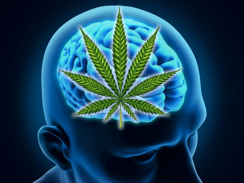 Addiction Cannabis - CANNABIS / Le plus tard sera le mieux pour le cerveau