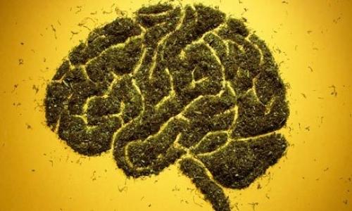 Addiction Cannabis - CANNABIS / Rend-il nos souvenir plus flou ?
