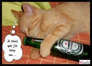j'ai trop bu