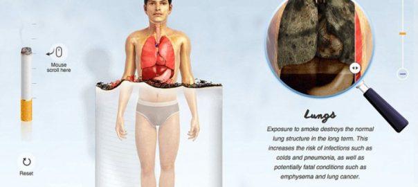 TABAC / 11 infographies expliquant ce que fumer fait à chaque partie de votre corps
