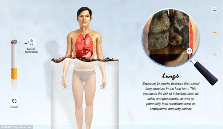 Addiction Tabac - TABAC / 11 infographies expliquant ce que fumer fait à chaque partie de votre corps