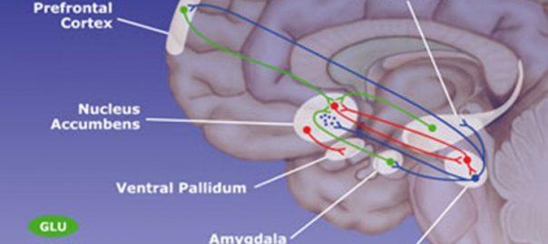 Implication complexe du système de récompense dans les addictions : une méta-analyse d'études d'IRM fonctionnelle dans JAMA Psychiatry, expliquée par son auteur.