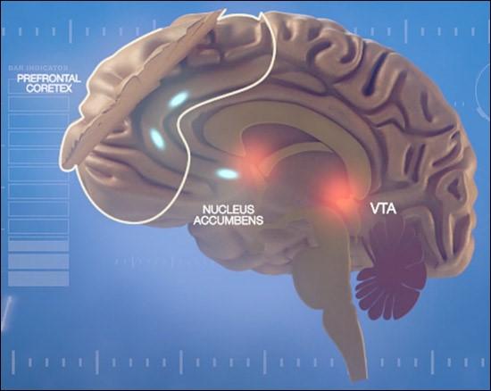 Addiction Cannabis - CANNABIS / La connectivité fonctionnelle entre le Noyau Accumbens et le Cortex Préfrontal à 20 ans est prédictive de la trajectoire d'usage dans les deux ans qui suivent
