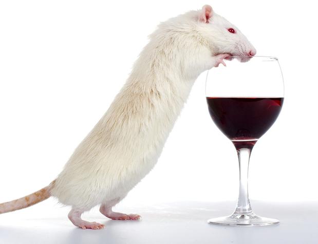 Addiction Alcool - ALCOOL / L'ADX71441 : une nouvelle molécule qui atténue l'appétence et la recherche d'alcool chez le rat par une modulation allostérique positive GABA-B