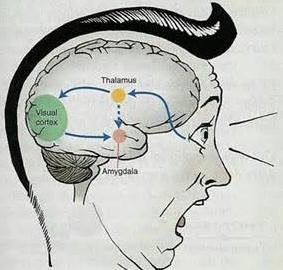 Rôle de l'hypexcitabilité amygadalienne dans l'addiction : une revue de Translationnal Psychiatry