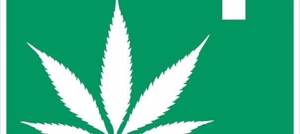 CANNABIS / Légalisation : des effets mitigés sur la consommation