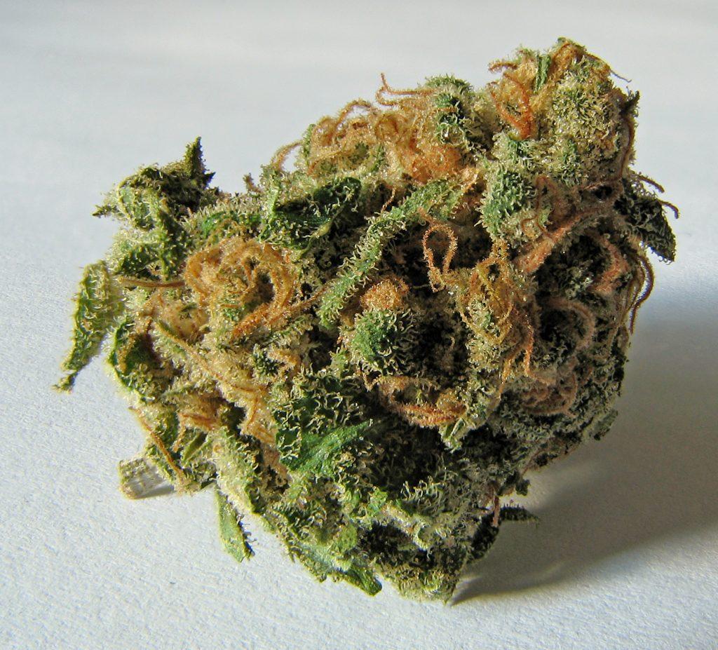 Addiction Cannabis - CANNABIS / Italie: vers la légalisation du cannabis thérapeutique