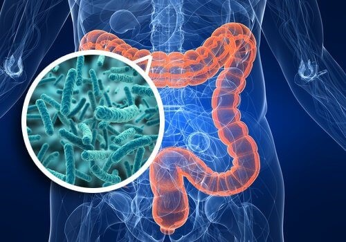 Addiction Alcool - Consommation chronique d'alcool et cirrhose : quand l'intestin trinque aussi
