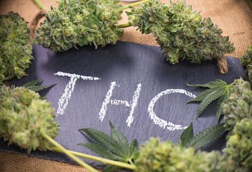 Addiction Cannabis - Consommer du cannabis à l'adolescence augmente le risque de schizophrénie 15 ans plus tard, et ce n'est pas lié à des symptômes prodromiques, à des consommations d'autres substances ou à des antécédents familiaux de schizophrénie