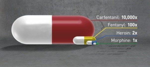 Le Fentanyl et ses dérivés continuent à remplacer l'héroïne dans l'univers des drogues : un article de Forensic Psychiatry sur l'Ocfentanil et le Carfentanyl.