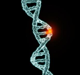 Addiction Alcool - Des gènes aux médicaments : une nouvelle approche dans la prise en charge du trouble d'usage d'alcool développée dans Psychopharmacology