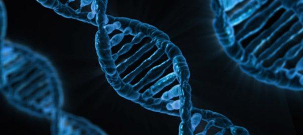 Trouble d'usage d'alcool et vieillissement cellulaire,  quand la génétique s'en mêle