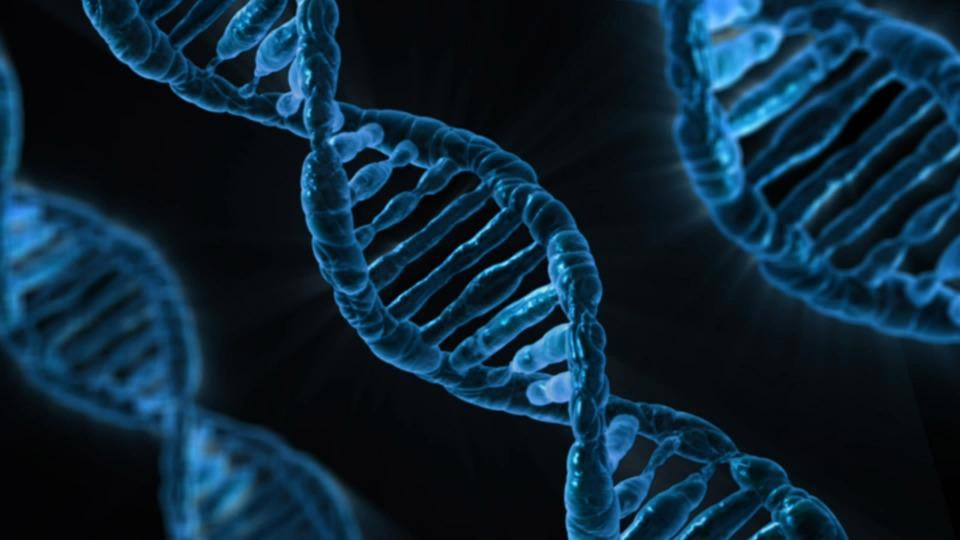 Addiction Alcool - Trouble d'usage d'alcool et vieillissement cellulaire,  quand la génétique s'en mêle