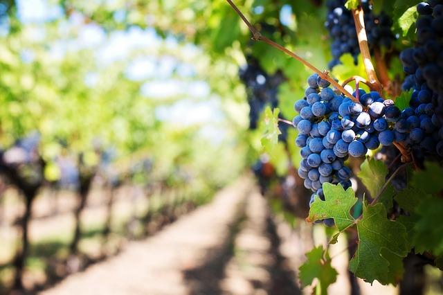 Addiction Alcool - Comment le lobby du vin veut le différencier des autres alcool