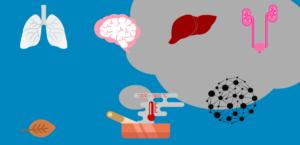 Que devient le tabac dans l'organisme ?