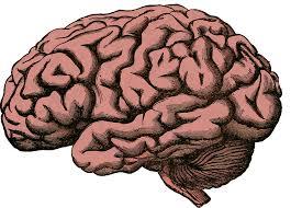 Addiction Autres addictions comportementales - « Hyperconnectés : le cerveau en surcharge » : résister aux appels des sirènes numériques