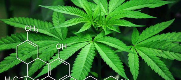 La façon d'inhaler le cannabis joue sur sa toxicité (PourquoiDocteur)