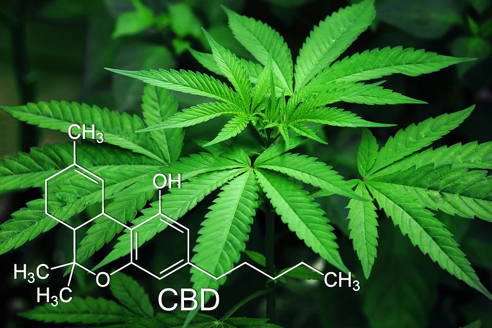 Addiction Cannabis - La façon d'inhaler le cannabis joue sur sa toxicité (PourquoiDocteur)