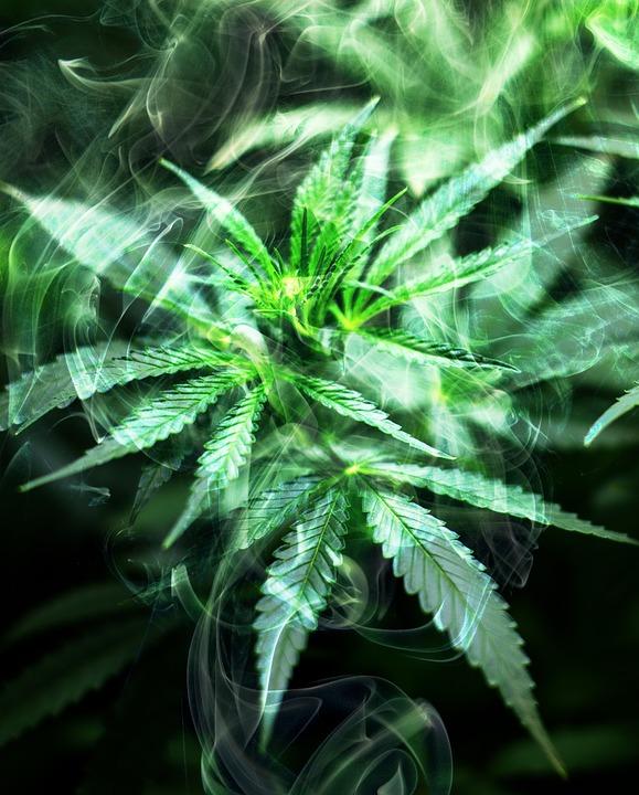 Addiction Cannabis - Vers une autorisation du cannabis thérapeutique ?