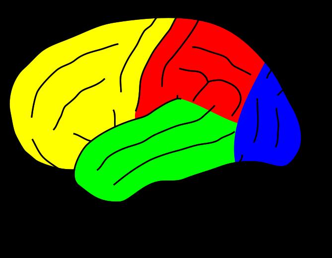 Cerveau, alcool et vertiges