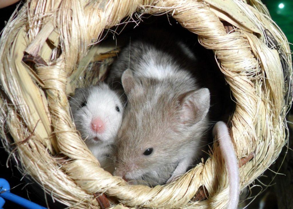 Addiction Toutes les addictions - Comment les animaux nous renseignent sur les risques d'addiction liés au confinement ?