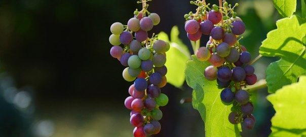 Covid 19 : augmentation de la consommation de vin en Europe
