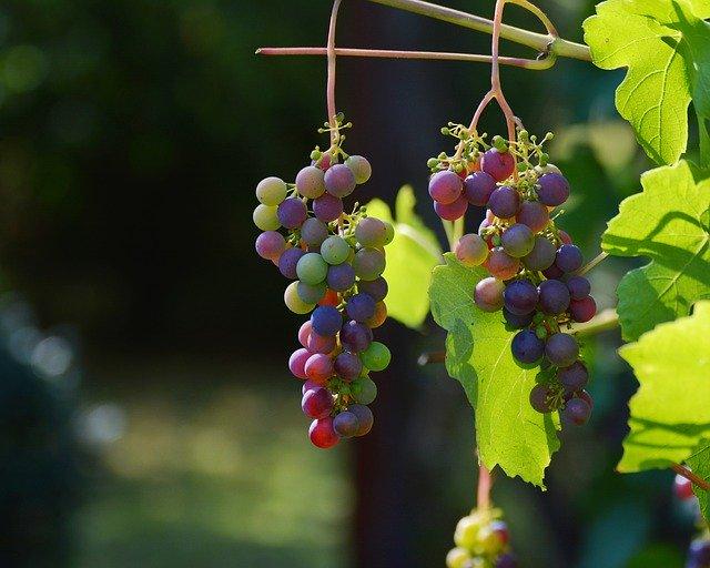 Addiction Alcool - Covid 19 : augmentation de la consommation de vin en Europe