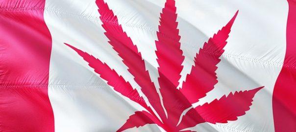 Retour d'expérience après un an de légalisation du cannabis « récréatif » au Canada